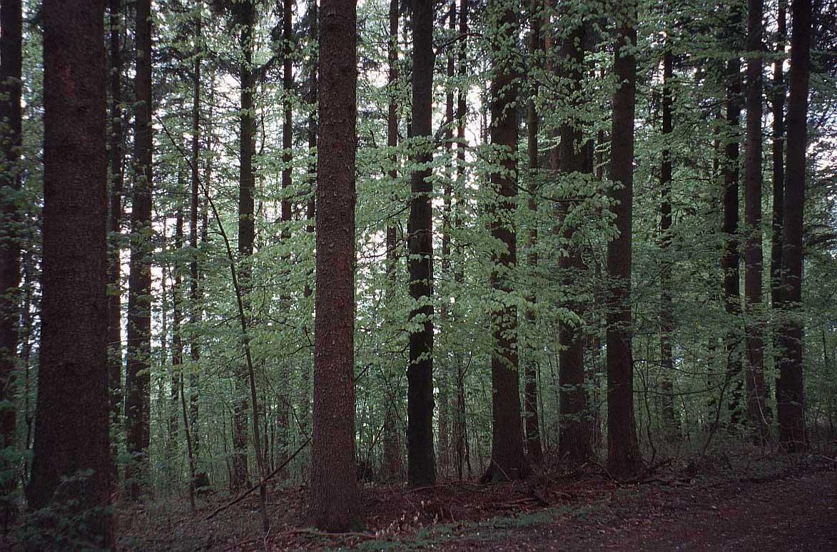 Pretty Trees A Forest Not Trees Novofemina